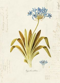 Antique Illustration, Botanical Drawings, Botanical Flowers, Paper Texture, Ephemera, Fancy, Antiques, Prints, Nature
