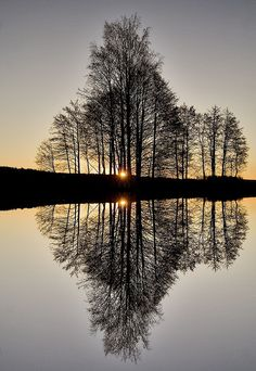 Reflected trees at twilight
