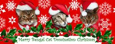 Bengal Cat Domination says Meowy Christmas to all!  You can also read about poor Simba ripping the end of his toe off :( ouchie!