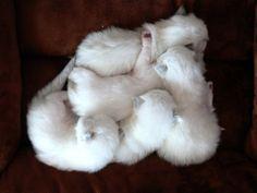 tiny newborn kittens -