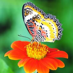 Shop for Mexican Sunflower Seeds by the Packet or by the Pound.Com offers Hundreds of Seed Varieties, Including the Finest and Freshest Mexican Sunflower Seeds Anywhere. Mexican Sunflower, Wild Sunflower, Sunflower Seeds, Dwarf Sunflowers, Mammoth Sunflower, Bird Tree, Garden Seeds, Wild Flowers, Beautiful Flowers