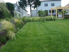 modern garden with stipa, festuca, calamagrostis