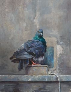 Venetian Pigeon by Bruce Gherman RaymarArt Painting Competition Entry  Oil 11 x 8.5  brucegherman.com