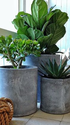 Concrete pots- sometimes the pots are almost prettier than the plants! LOL! Balcony Garden, Garden Pots, Indoor Garden, Outdoor Gardens, Outdoor Potted Plants, Balcony Plants, Outdoor Pots, Outdoor Table Decor, Big Indoor Plants