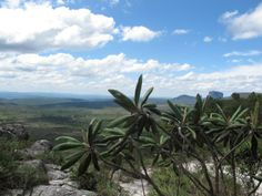 Brazil, Mountains, Nature, Plants, Time Out, Watches, Ad Home, Naturaleza, Plant