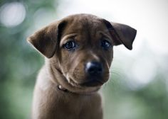 puppy is worried.