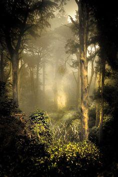 #Zen #Forest