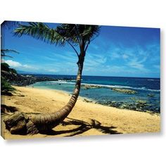 ArtWall Kathy Yates Palm Tree In Paradise Gallery-Wrapped Canvas, Size: 32 x 48, White