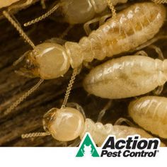 Ever wonder about the life of a termite?