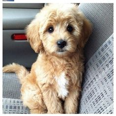 I think I would name him Fred