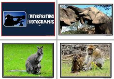 Interpreting Photographs Set 2. A collection of eight photographs with animals as subjects. Also included is a set of questions to prompt student interpretation of the photograph. This response could be given orally or in written form. This resource creates an instant wall display. The photographs may also be used as writing prompts. See VISUAL LANGUAGE at ... www.abcteachingresources.com