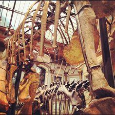 …OMG....What big bones you have.