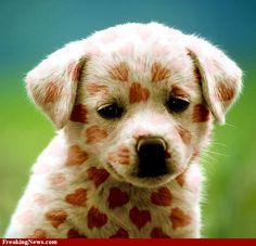 Happy Puppy Love