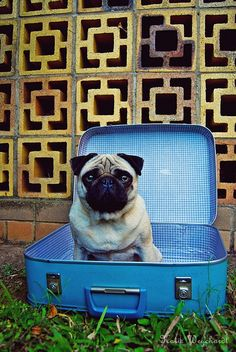 You're NOT getting on a vespa without me.  I'm comin too!  #RIDECOLORFULLY