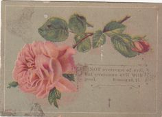 Be not Overcome of Evil Pink Rose Religious Victorian Card C 1880s | eBay