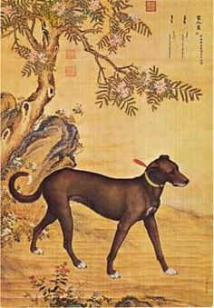"""10. This dog, called Xueluzhua (""""White Foot with a Spot on Chest""""), was offered by Gerdanrongleng, a Taisha from one of the Mongolian tribes that had moved into Zhunger Basin."""