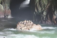 Sea Lion Caves, Florence, OR