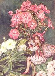 Pink fairy.