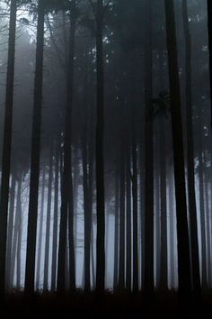 This is what I imagined the forrest to look like where Hamlet saw the ghost