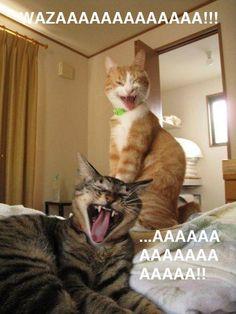 Chat wazaaaaaaaaa!