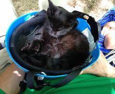 Abandoned Kitten Strays Into The Hearts Of Climbers