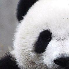 ✔ Panda