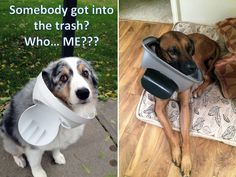 Pets That Are Stuck But Pretending Everything Is Fine