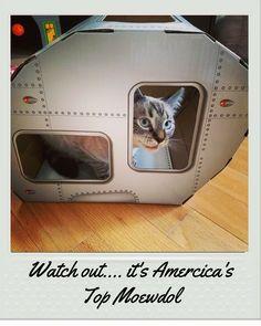 ETbotu Creative Cat Scratch Board Box Carton Pet Nest Bed Cat Scratching Mat Pet Toy Claw Care Toy