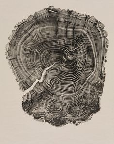 Willow. Cross Section of tree trunk. Woodcut by Bryan Nash Gill. http://www.bryannashgill.com/ Tags: Linocut, Cut, Print, Linoleum, Lino, Carving, Block, Woodcut, Helen Elstone, Trees