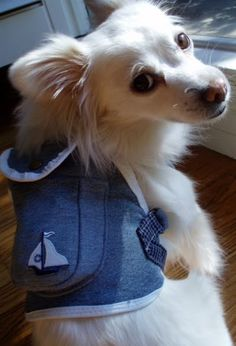Sew DoggyStyle: an awesome blog for DIY doggie clothing and accessories.