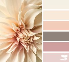 Design Seeds, for all who love color. Apple Yarns uses Design Seeds for color inspiration for knitting and crochet projects. Design Seeds, Skin Color Palette, Color Palate, Colour Schemes, Color Combinations, Color Swatches, Room Paint, Bedroom Colors, Color Theory