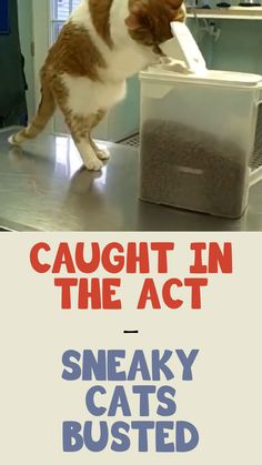 Caught in the act!! Sneaky cats BUSTED!