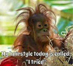"""My hairstyle today is called: """"I tried"""" funny jokes funny quotes humor funny pics fun quotes funny images fun pics jokes and fun Funny Shit, Funny Cute, The Funny, Funny Jokes, Hilarious, Funniest Memes, Funniest Quotes Ever, Funny Stuff, Funny Animal Memes"""