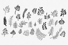 Hand Drawn Vector Leaves & Branches by Hello Brio Studio on Creative Market