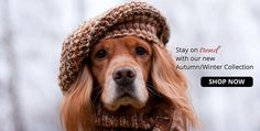 Autumn/Winter 2014/15 Dog Clothing Campaign from Purely Pooch. Click here to shop the full collection.