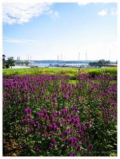 Hamnträdgården | Flickr - Photo Sharing!