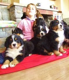 Berners and children - a wonderful combination