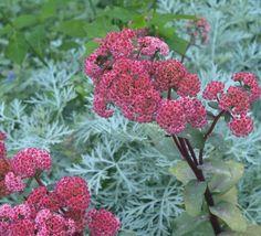 Garden Ideas, Vegetables, Flowers, Plants, Red, Vegetable Recipes, Landscaping Ideas, Plant, Backyard Ideas