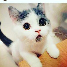 Un gatito muy cosi