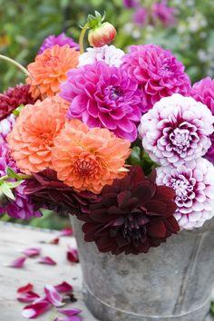 Genus: Dahlia When they bloom: According to The Old Farmer's Almanac, dahlias… Amazing Flowers, Beautiful Flowers, Spring Flowering Bulbs, Flower Pictures, Pretty Pictures, Autumn Garden, Plantation, Fall Flowers, Dahlia Flowers