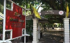 Getting a Yellow Fever Vaccine in Bangkok Snake Farm, Yellow Fever, Blog Page, Travel Advice, Bangkok, Asia