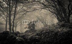 Gothic forest with fog! #Gothic #Dark #MonteCucco #Autumn #Trees #Park #Umbria #Italia #Italy #Nature #Goth #Halloween