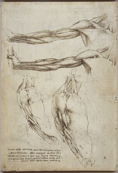 The veins and muscles of the arm Leonardo da Vinci (Vinci (how to draw hands arm muscles) Leonardo, Leonardo Da Vinci, Anatomy Art, Artist, Renaissance Art, Life Drawing, Anatomy For Artists, Anatomy Drawing, Body Drawing
