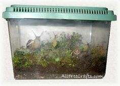 How to keep pet garden snails in a small pet tank or habitat that provides comfortable shelter and a good supply of air, water, food and calcium.