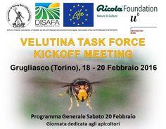 Velutina task force, il 20 Febbraio a Grugliasco (TO) – Apinsieme