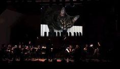 """El """"Concierto para orquesta y gato"""", del compositor Mindaugas Piecaitis, tocada por la Klaipeda Chamber Orchestra ganó también un Record Guinness."""