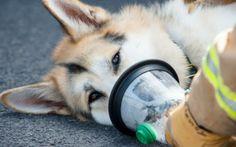 Duke of Kent's kindness saves a family pet #DukeofKent #dogs #SmokeyPaws