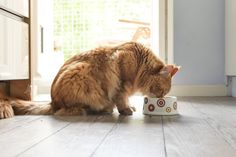 The amount of wet food your cat needs depends on factors such as age and body condition. Learn how much wet food your cat needs.