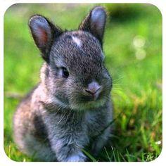 - @insta_animal- #webstagram #rabbit #cute #adorable #cutie #baby #smile #pet #animals #love