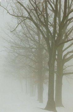 ✯ Fog